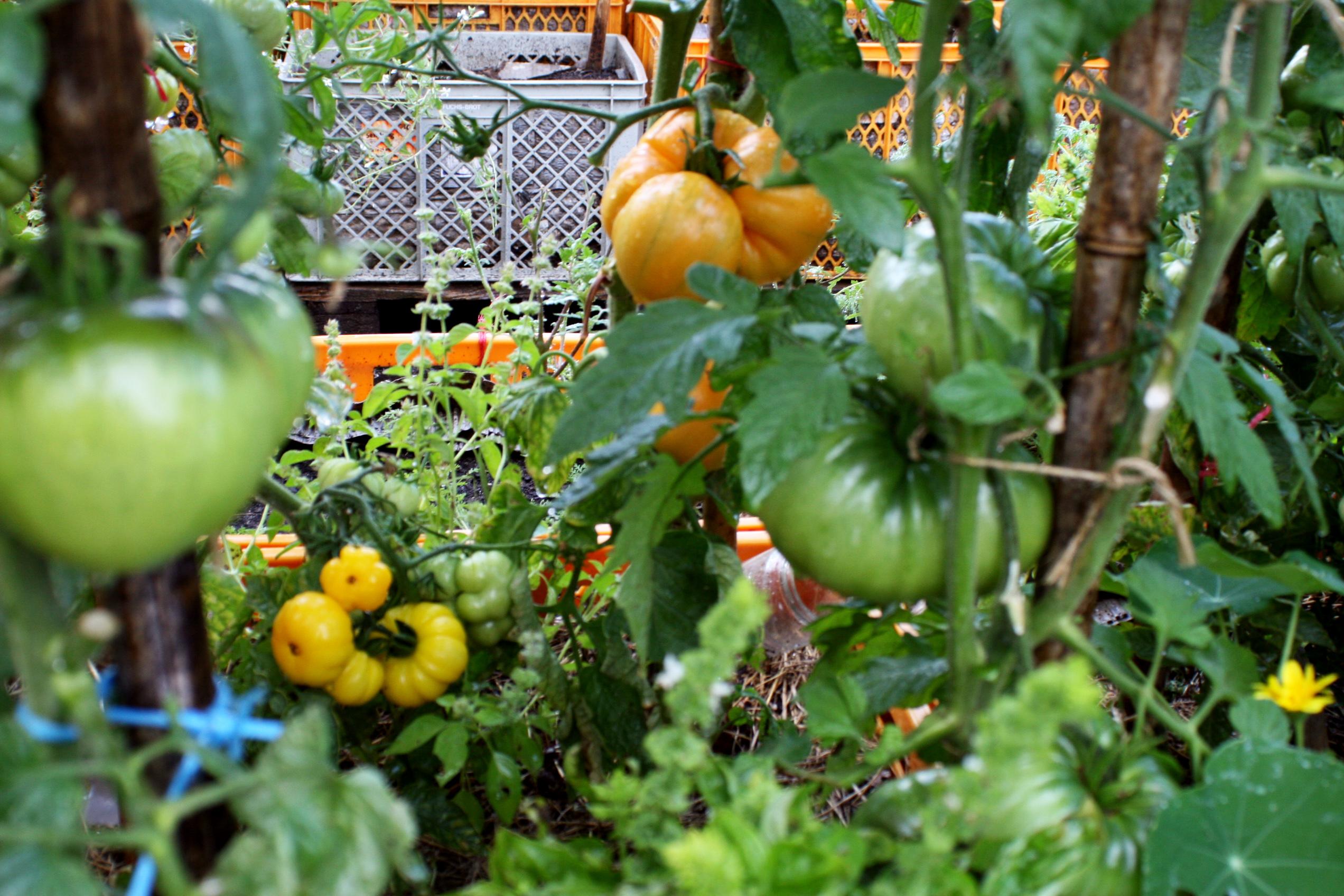 Urban_Gardening_Sommercamp_6
